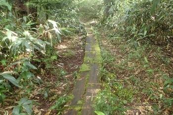 007P8215713苔むした木道が時々ある.JPG